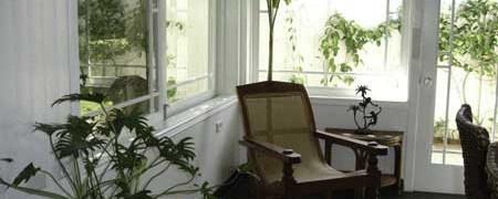 plantsinsunroom2